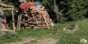"""Kocia rodzina przed """"Chatką pod Niemcową"""""""