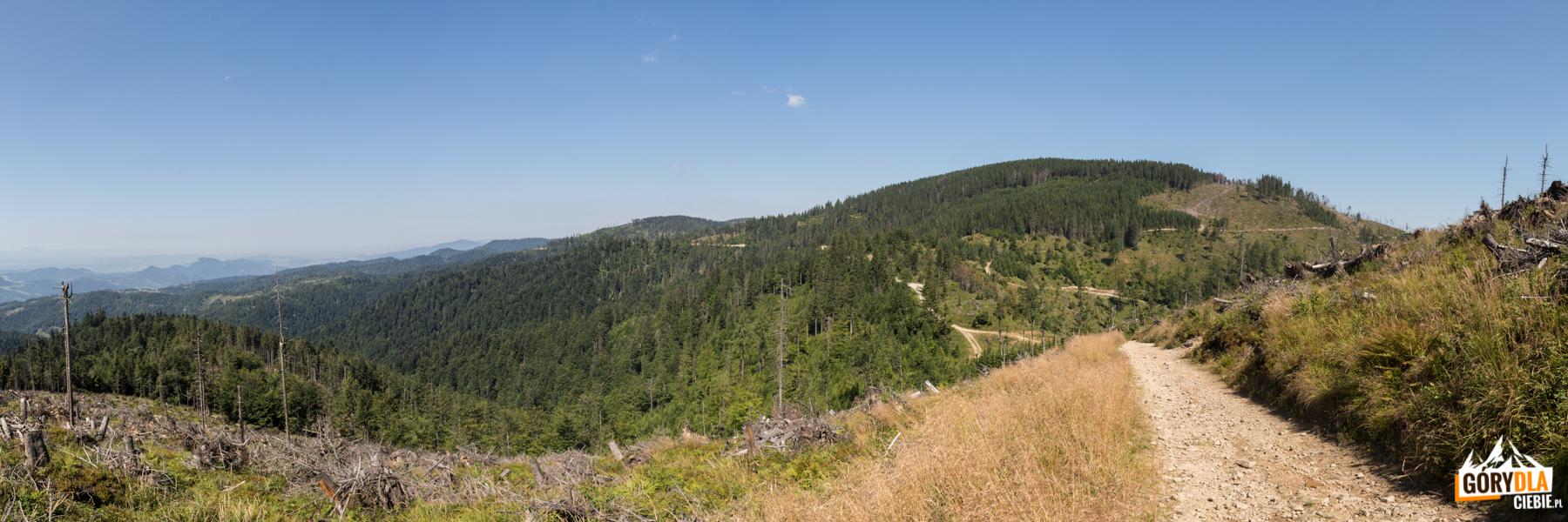 Panorama Pasma Radziejowej z Wielkiego Rogacza (1182 m)