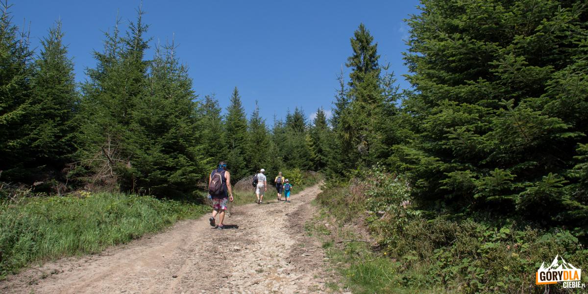 Droga zejścia z Wielkiego Rogacza na Przełęcz Obidza