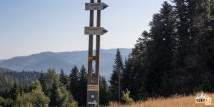 Niebieski szlak łączy się z żółtym z Piwnicznej na NIemcową
