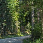 Droga z Kosarzysk na Przełęcz Obidza
