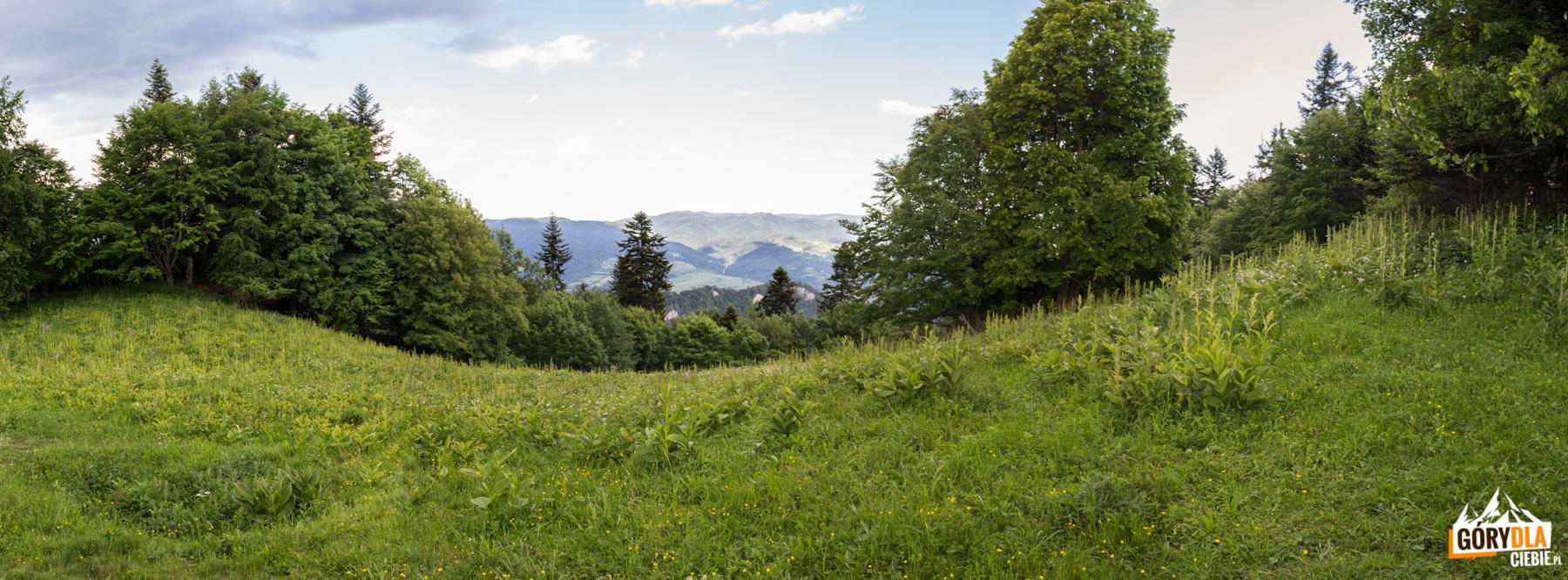 Widoki z zejścia z Trzech Koron na Przełęcz Szopka