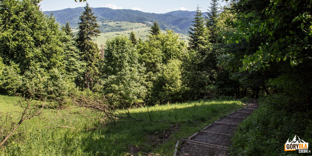 Zejście z Przełęczy Sosnów do Krościenka