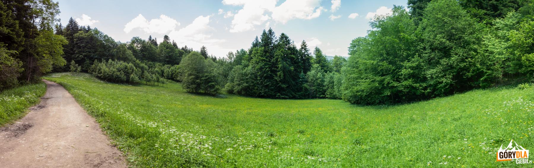 Pienińskie łąki koło Bańków Gronik