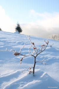 Jest też bonsai na tle Pilska :)