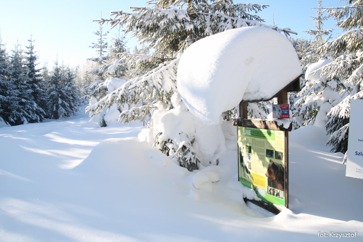 Przez Uszczawne dochodzimy do odejścia szlaku pod Buczynką, na trasie sporo śniegu