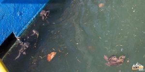 Basen (o wymiarach 8×25 metrów) wczesną wiosną służy żabkom