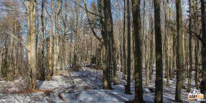 Las na Lubogoszczy