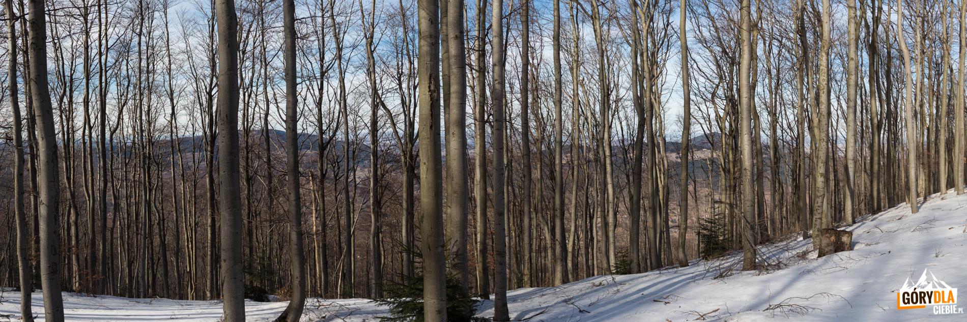 Lubogoszcz porasta ładny bukowy las