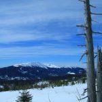 Duży wiatrołom na południowym stoku pod szczytem Policy odsłonił widoki na południe