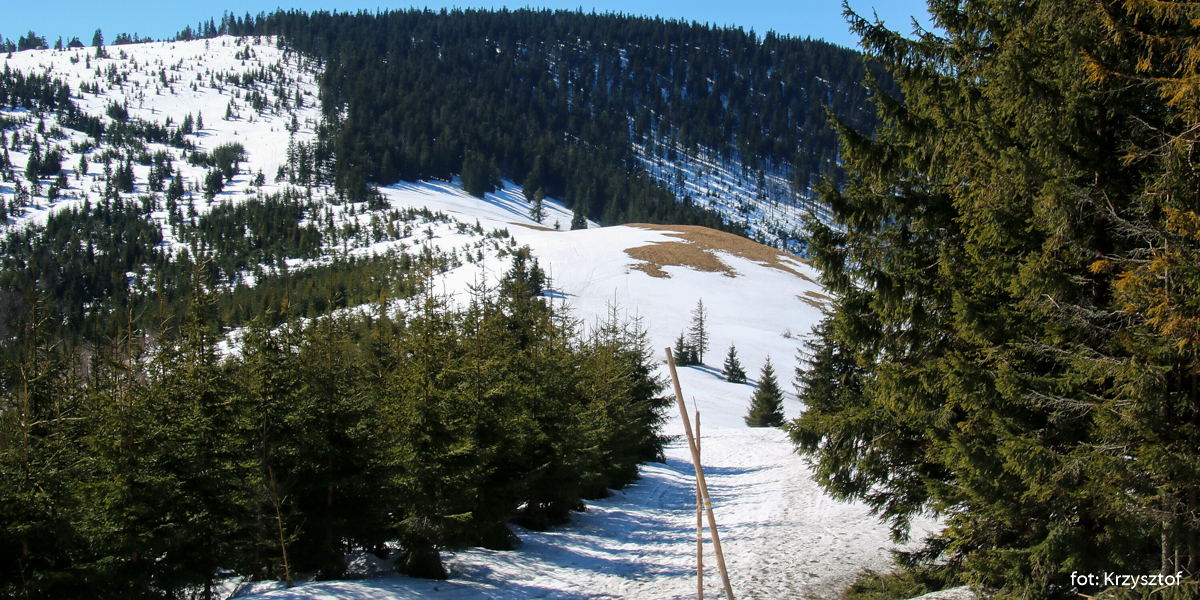 Przełęcz i Hala Pawlusia