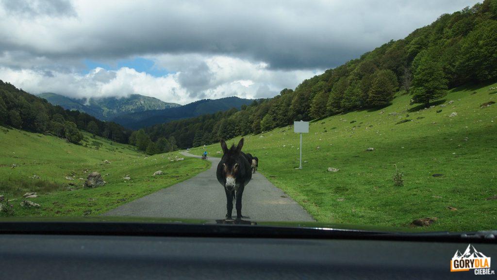 Jezioro Arou Pireneje