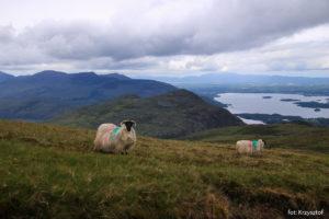 Widoki na na góry MacGillycuddy's Reeks i Lough Leane