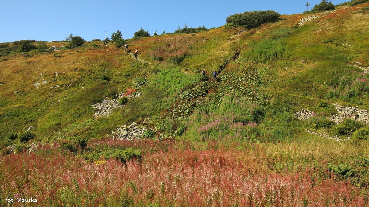 W drodze na szczyt Babiej Góry - powyżej ruin schroniska