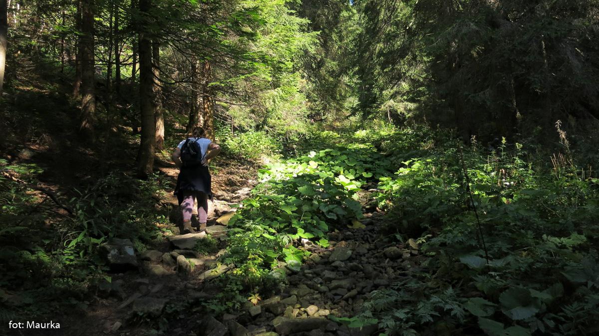 Początek zielonego szlaku na Babią Górę