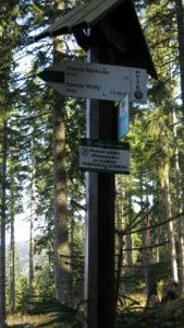 Szlak zejścia do Zawoi Markowa