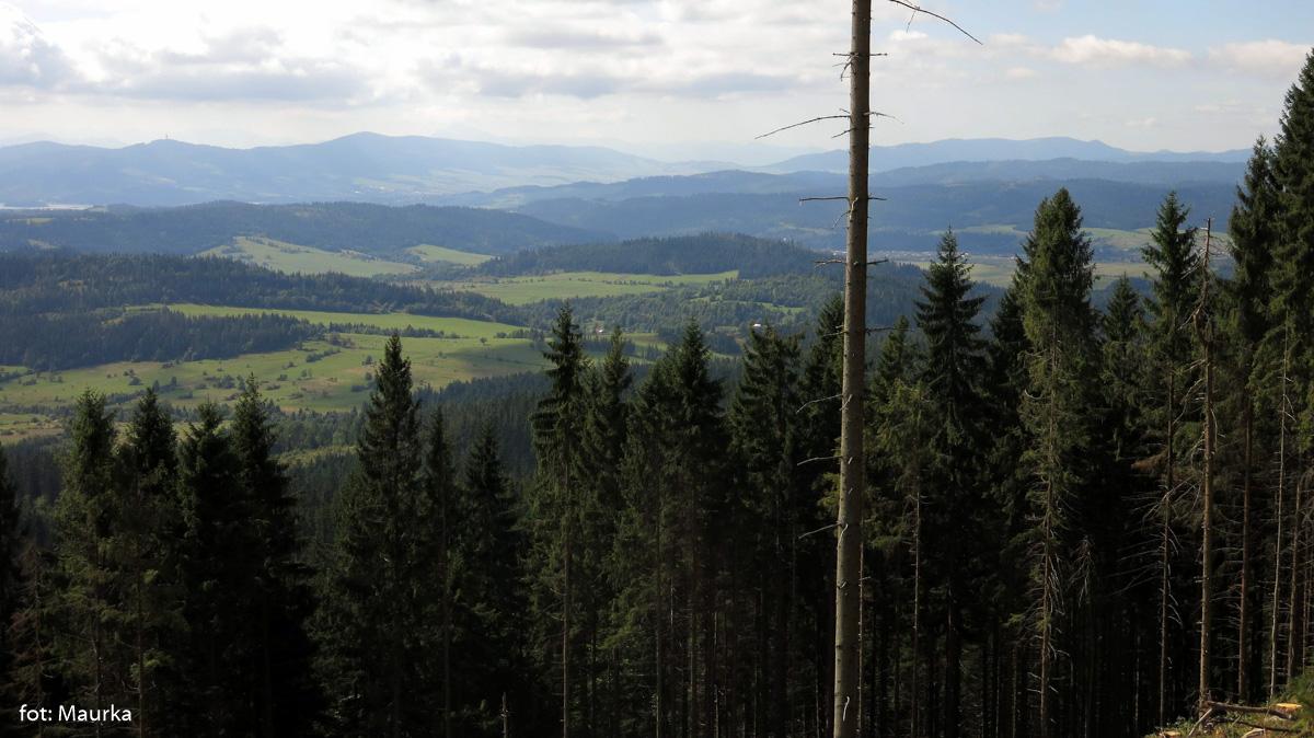 Pierwsze widoki z trasy zielonego szlaku na Babią Górę