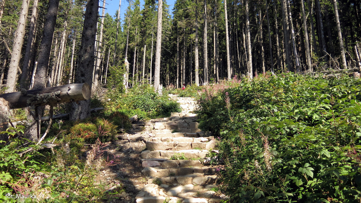 Dolna, zalesiona część zielonego szlaku na Babią Górę