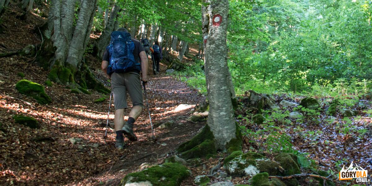 Początek drogi na Korab - najpierw przez bukowy las