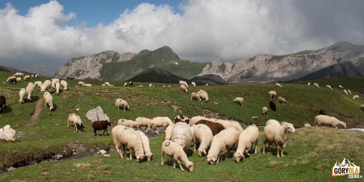 W drodze na Korab nie raz spotkamy stada owiec pilnowane przez pasterzy z psami.