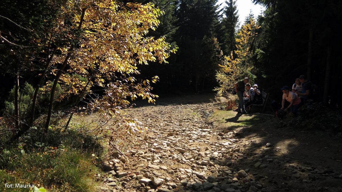 Trasa na Ćwilin - podejście z Wilczyc
