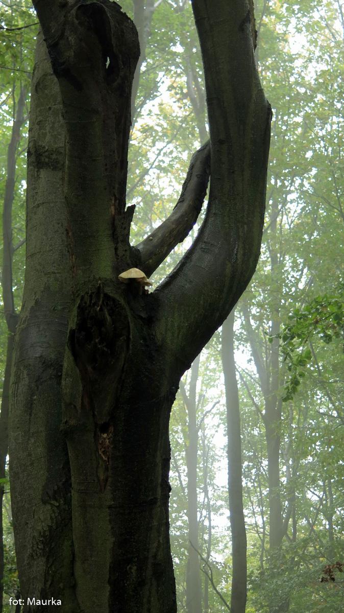 Grzyby wysoko na drzewie