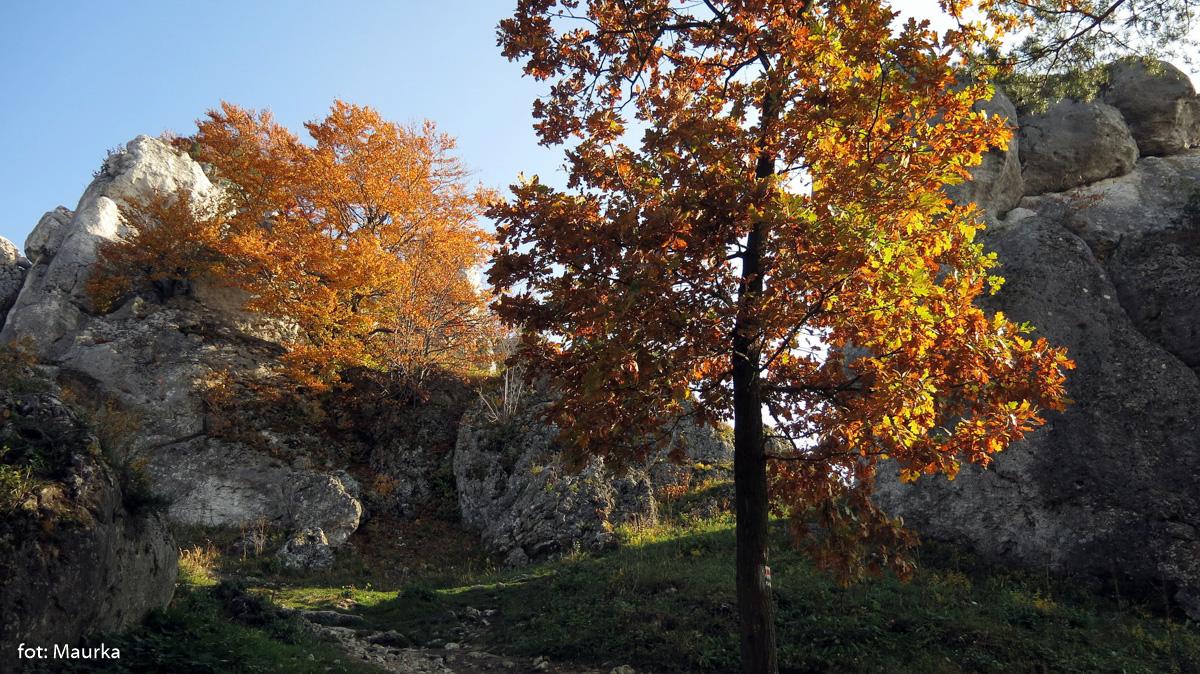 Góra Zborów, zdj. Maurka