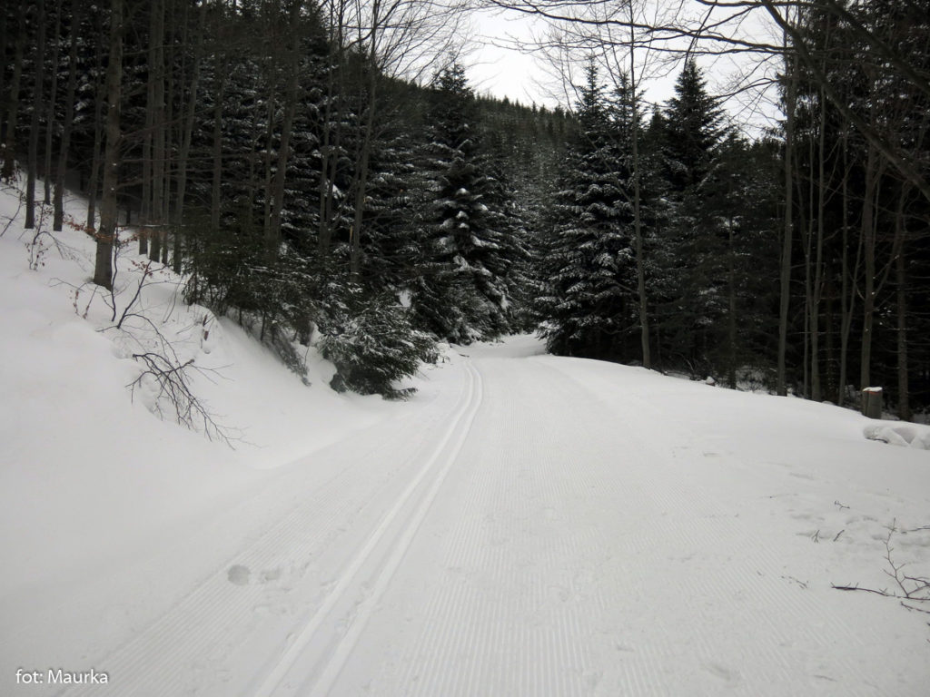 Szlak przechodzi przez trasy biegowe wokół Mogielicy