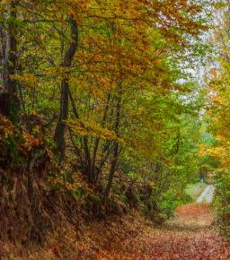 Główny Szlak Świętokrzyski z Gołoszyc do Trzcianki