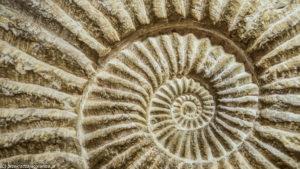 Skamielina w Muzeum Minerałów i Skamieniałości