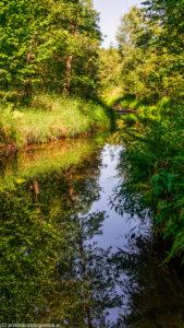 Rzeka Lubrzanka u podnóża Radostowej