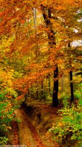 Leśny trakt w okolicy szczytu Truskolaska
