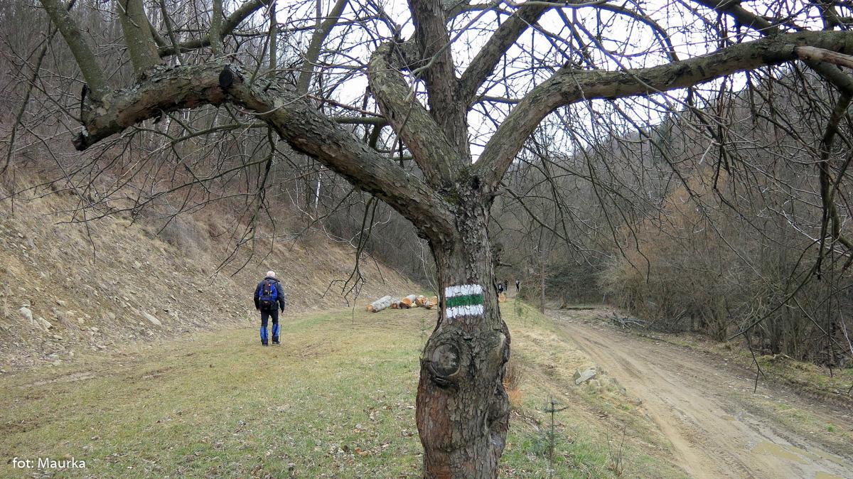 Zielony szlak z Tylmanowej na Koziarz