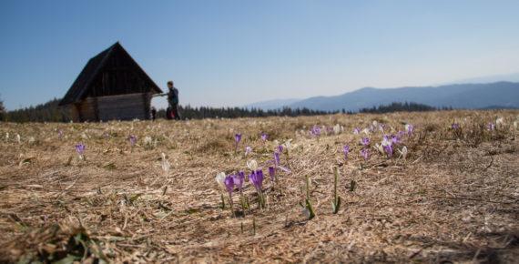 Wiosna w Gorcach