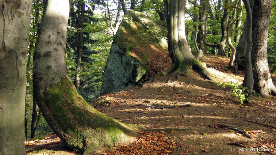 Wychodnie skalne na Kamieniu