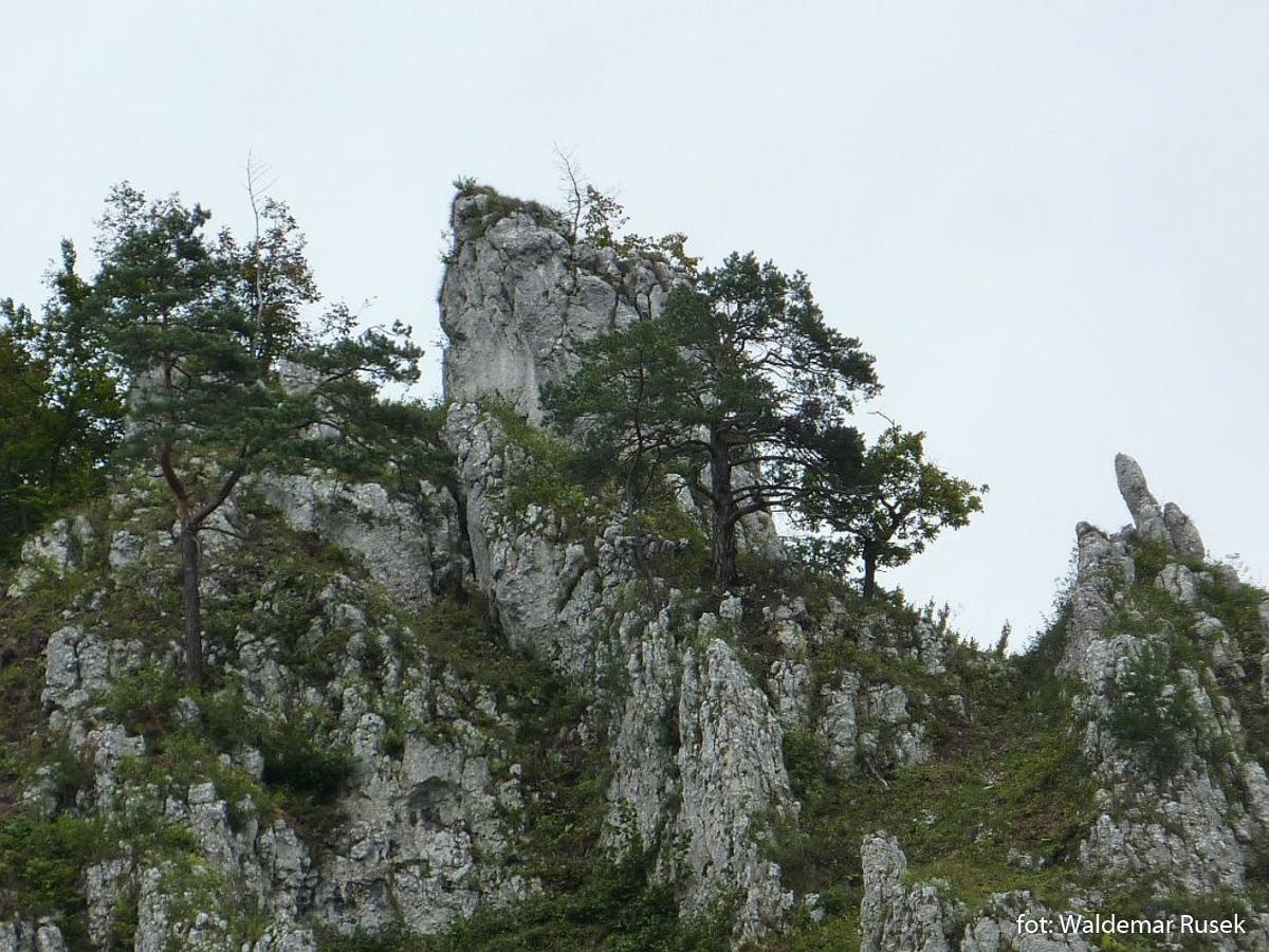 OPN Dolina Prądnika Panieńskie Skały koło Igły Deotymy