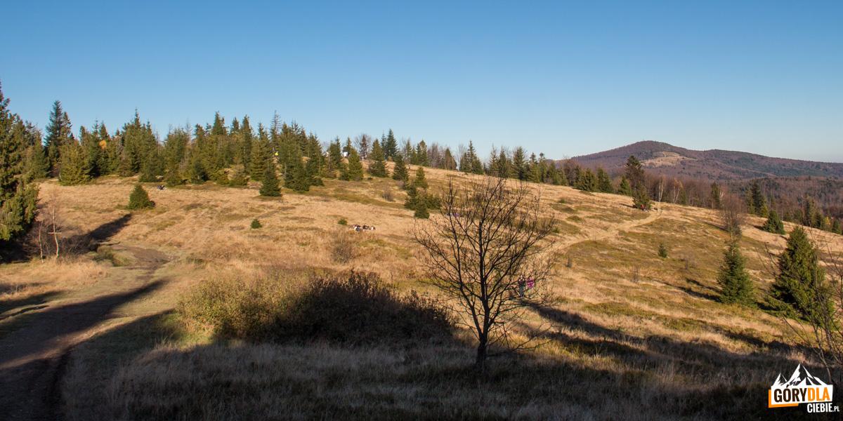 Widok spod szczytu Jasienia na Polanę Skalne i Mogielicę (1170 m) spod szczytu Jasienia