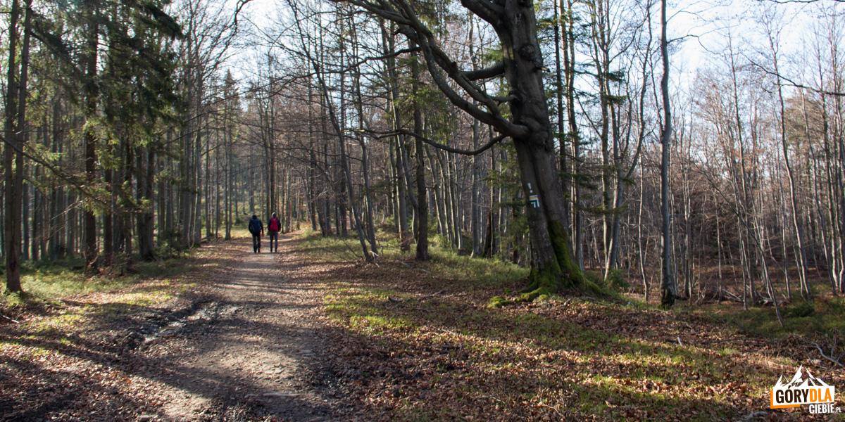 Zielony szlak z Hali Kamińskiego na Mędralową