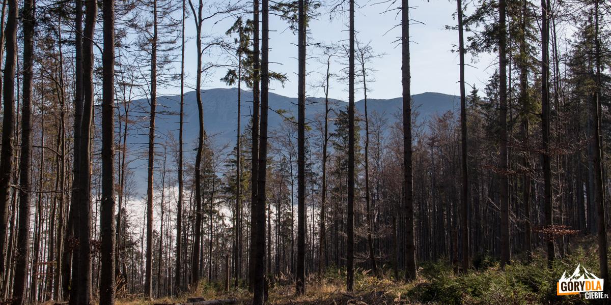 Widok na Babią górę z grani przy Hali Kamińskiego
