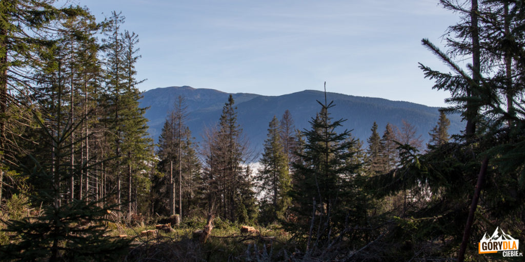 Widok na Babią Górę z grani przy Hali Mędralowej