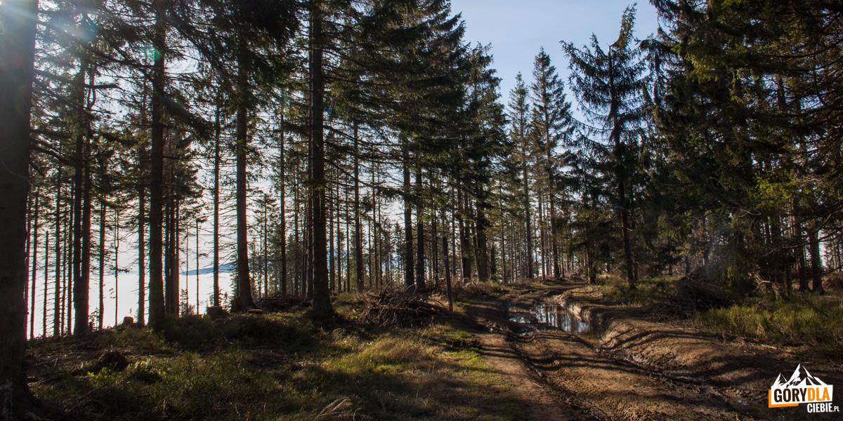 Graniczny, czerwony szlak poniżej Hali Mędralowej