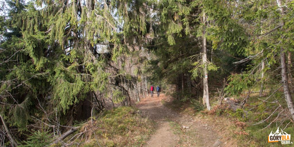 Na zielonym szlaku pomiędzy Małą Mędralową (1042 m), a Jaworzyną (997 m)