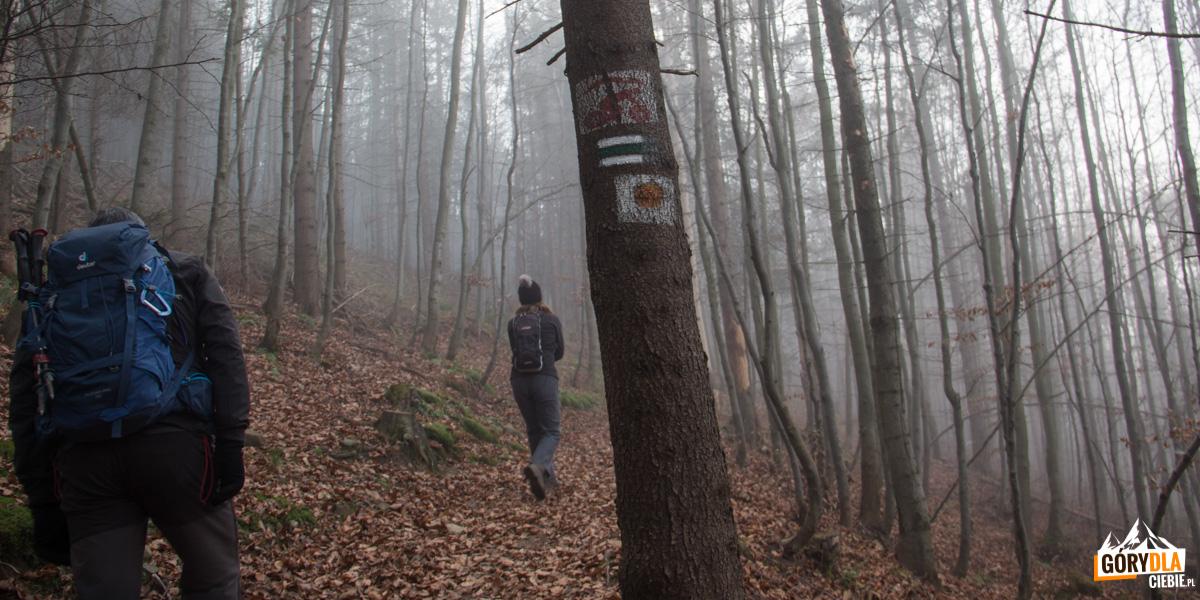 Zielony szlak na na Halę Kamińskiego