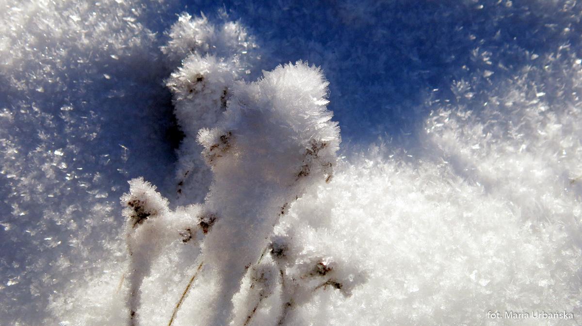 Zimowe fantazje na polanach grani Łopienia