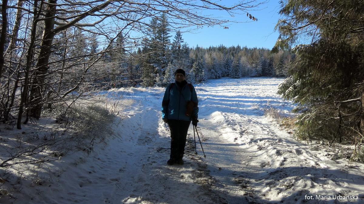 Autorka na skraju polany Myconiówka w grani Łopienia