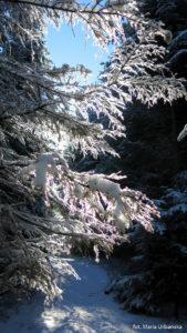 Zimowe fantazje w drodze na Łopień