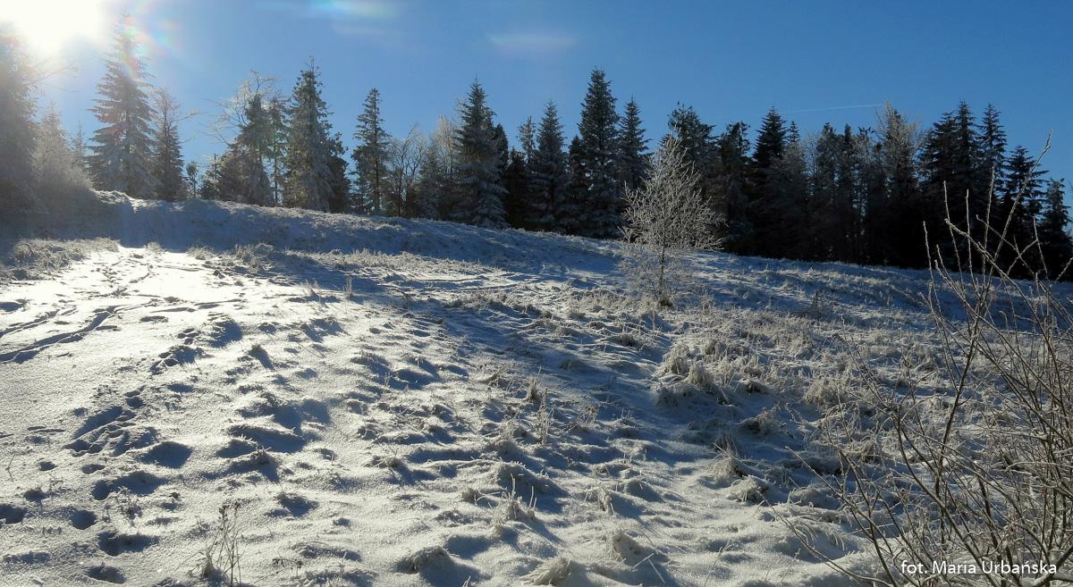 Zimowe hale na grani Łopienia
