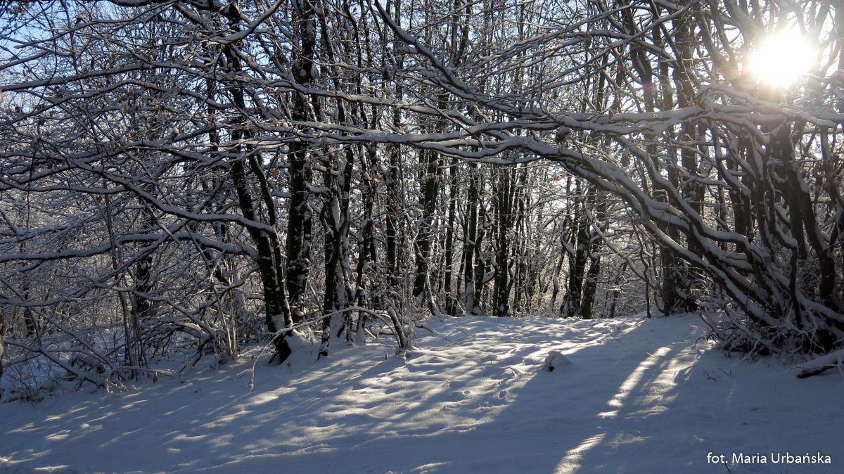 Początek zimy na Kamionnej (802 m)