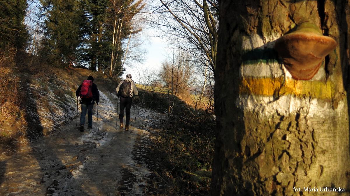 Z Poręby Górnej żółtym szlakiem na Maciejową