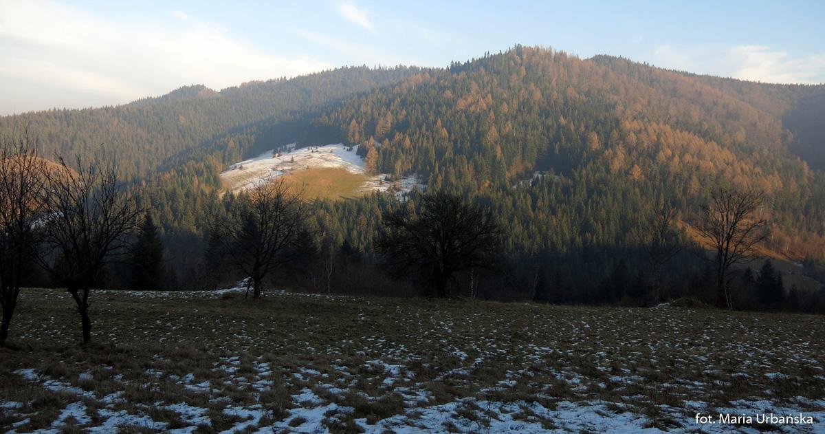 Widoki z polany Polanki na Tobolów (994 m) - droga ze Starych Wierchów do Poręby Górnej